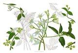 Solanum I Art Print