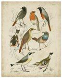 Non-Embellished Avian Gathering I Art Print