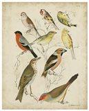 Non-Embellished Avian Gathering II Art Print