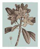 Flowering Trees IV Art Print