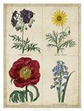Botanical Grid I Art Print