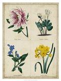 Botanical Grid II Art Print
