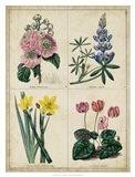 Botanical Grid III Art Print
