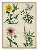 Botanical Grid IV Art Print