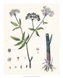 Berge Botanicals II Art Print