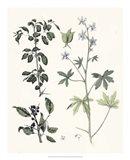Berge Botanicals IV Art Print
