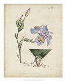 Lavender Curtis Botanicals IV Art Print