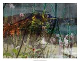 Mountain Wildflowers I Art Print