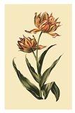 Vintage Tulips III Art Print
