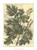 Weathered Maple Leaves I Art Print