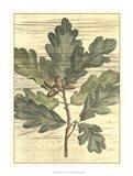 Weathered Oak Leaves I Art Print