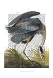 Blue Heron 1 Art Print
