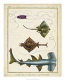 Antique Rays & Fish I Art Print