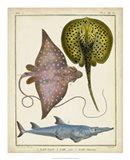 Antique Rays & Fish II Art Print