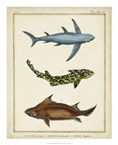 Antique Rays & Fish III Art Print