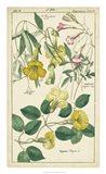 Spring Blooms II Art Print