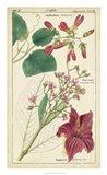 Spring Blooms IV Art Print