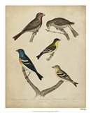 Bonapart Birds I Art Print