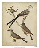Bonapart Birds II Art Print
