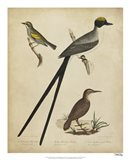 Bonapart Birds III Art Print