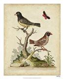 Edwards Bird Pairs I Art Print