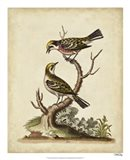 Edwards Bird Pairs II Art Print