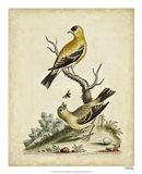 Edwards Bird Pairs III Art Print