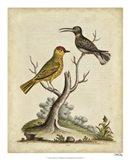 Edwards Bird Pairs IV Art Print