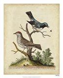 Edwards Bird Pairs V Art Print