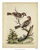 Edwards Bird Pairs VI Art Print