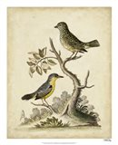 Edwards Bird Pairs VII Art Print