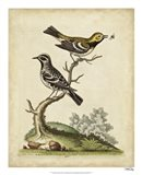 Edwards Bird Pairs VIII Art Print