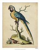 Edwards Parrots II Art Print