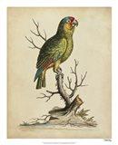 Edwards Parrots III Art Print