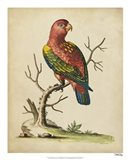 Edwards Parrots IV Art Print