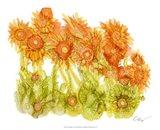 Sunlit Poppies I Art Print