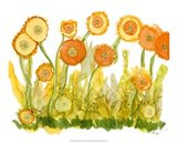 Sunlit Poppies II Art Print