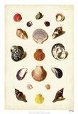 Shells, Tab. XI Art Print