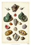 Shells, Tab. V Art Print