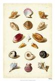 Shells, Tab. VI Art Print