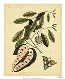 Blue-Tail Lizard, Pl.T67 Art Print