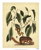 Ground Squirrel, Pl. T75 Art Print