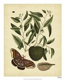Moth, Pl. T86 Art Print