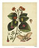 Moth, Pl. T91 Art Print
