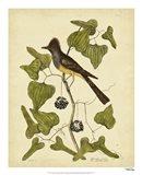 Crest. Fly-Catcher, Pl. T52 Art Print