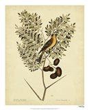 American Goldfinch, Pl. T43 Art Print