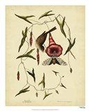 Little Sparrow, Pl. T35 Art Print