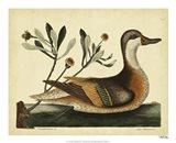 Ilatheria Duck, Pl. T93 Art Print