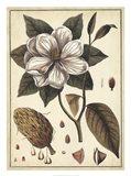 Ivory Botanical Study I Art Print