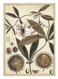 Ivory Botanical Study II Art Print
